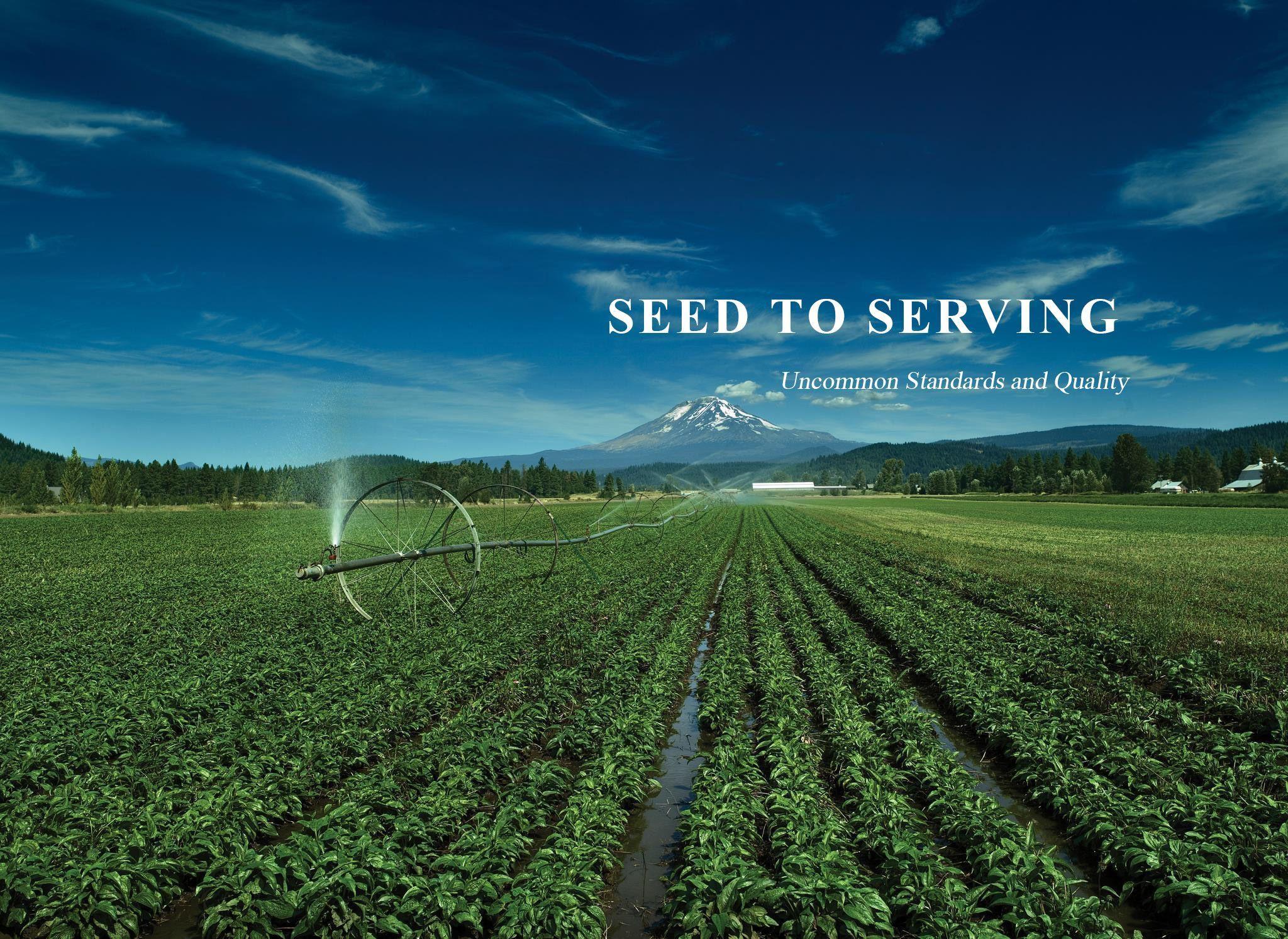 Seed To Idea