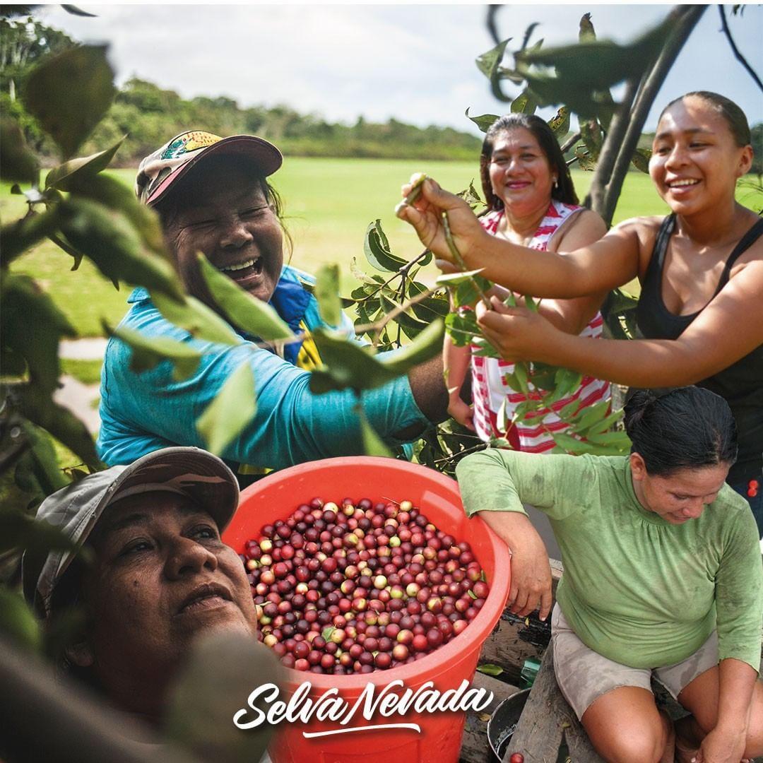 Rescuing the Flavors of Colombian Biodiversity with Healthy Food / Los sabores de la biodiversidad colombiana con alimentos sanos