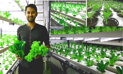 Pesticide-Free Food no Longer a Luxury