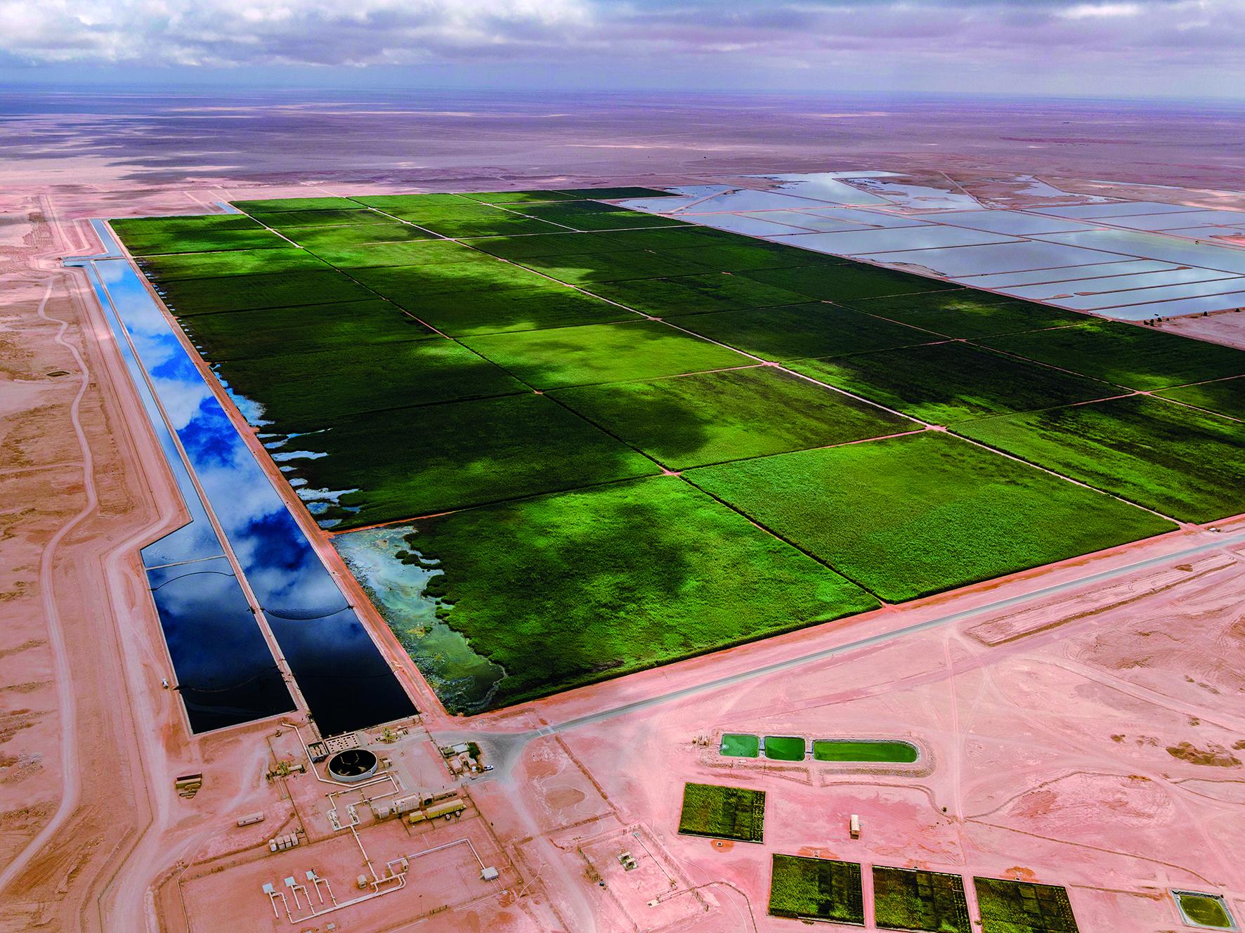 Green Oasis in the Desert