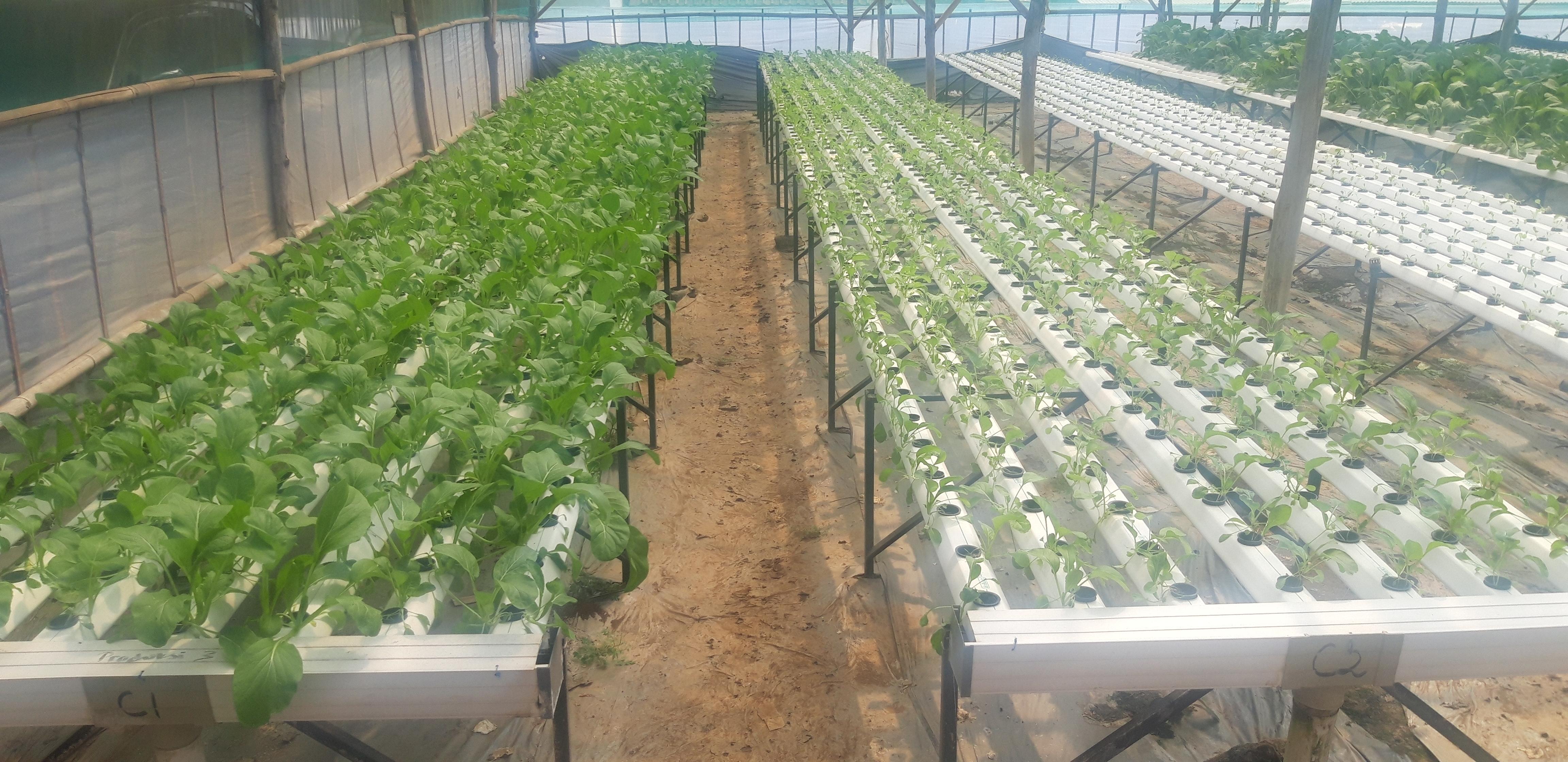 CV. Berastagi Farm