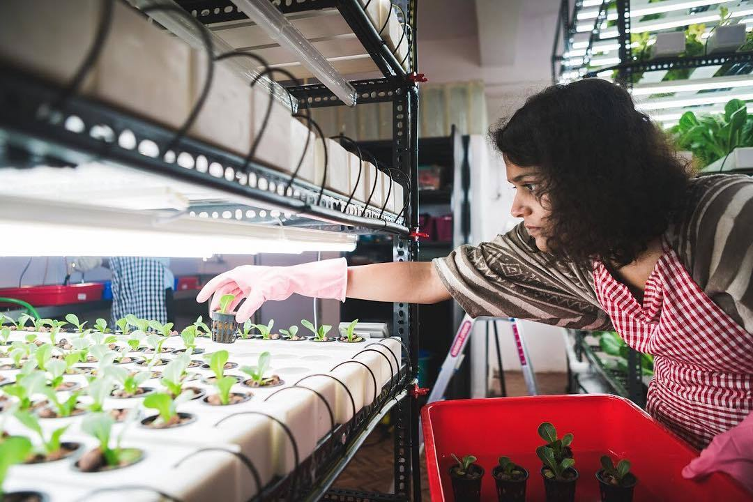 Hydroponics - Redefining Agriculture