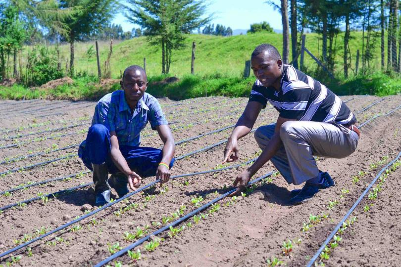 Reducing Costs and Tripling Crops