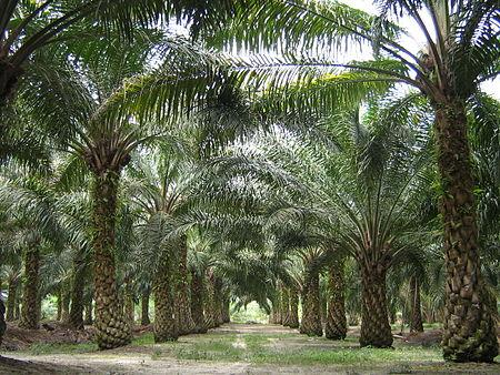 Responsible Palm Oil Sourcing