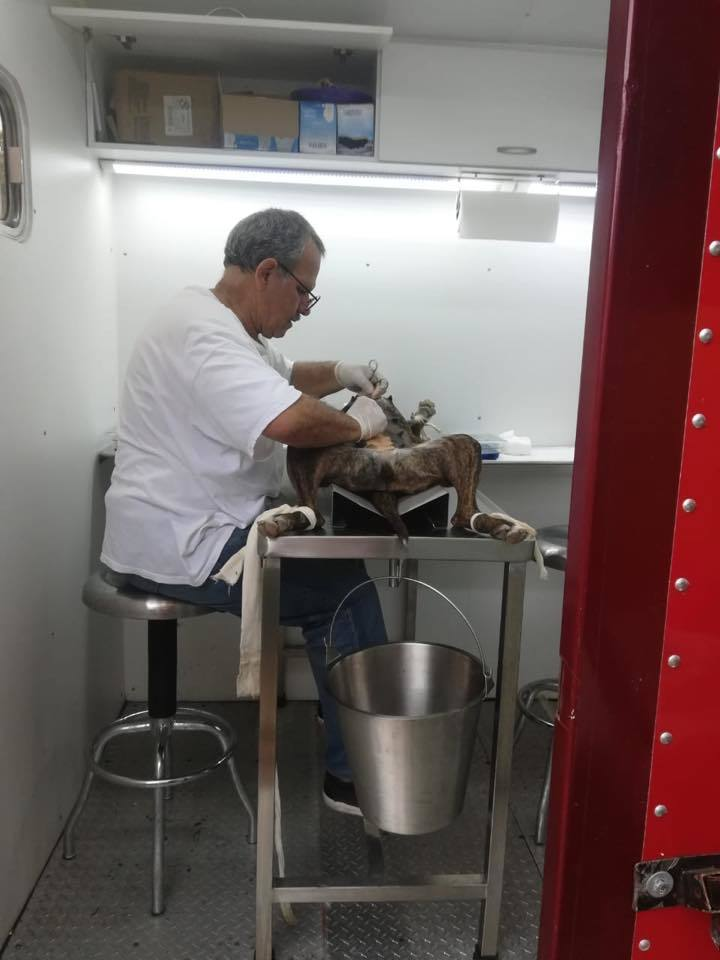 Education: The Key to Animal Control in Mexico