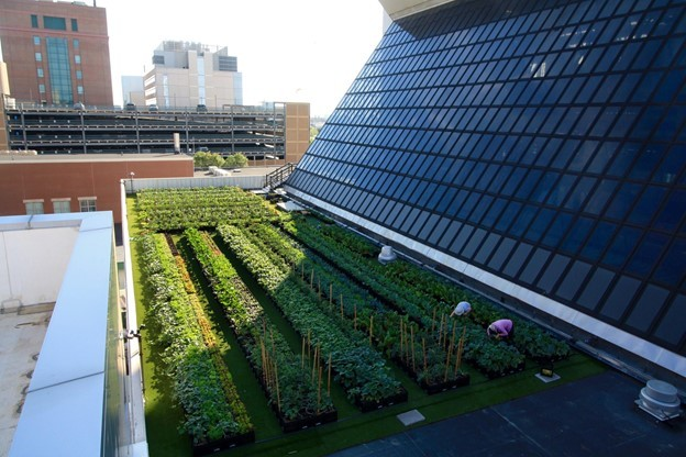 Building Rooftop Environments