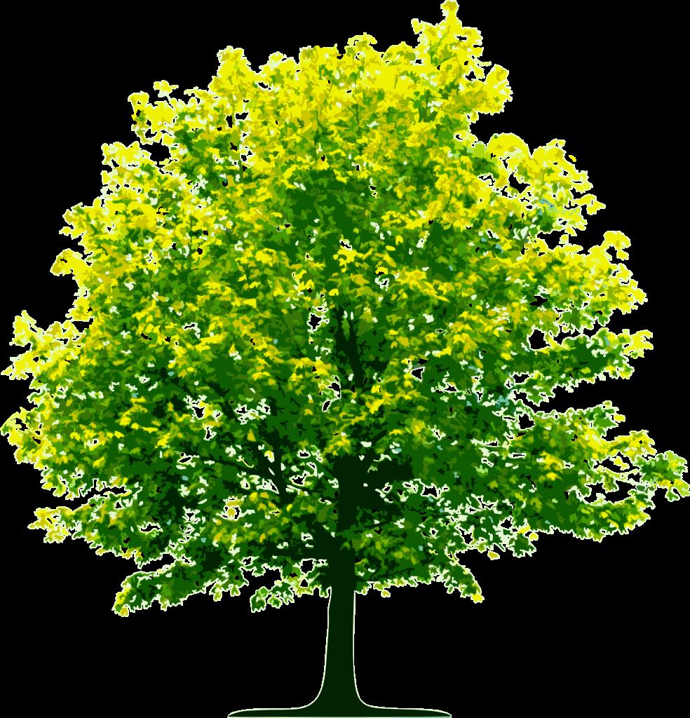 Creating a Greener Tomorrow