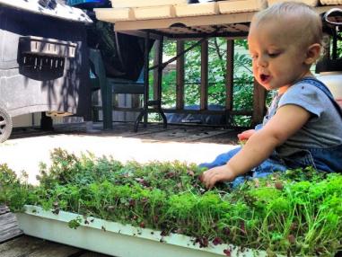 Innovative Microgreen Farming