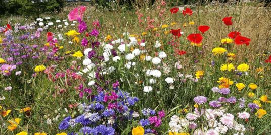 Wildflower Lawns & Roofs