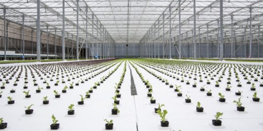 Hydroponics: Future Growth in the Present