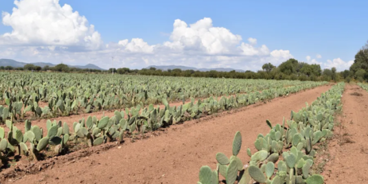 A Step For Change In Fashion: Mexican Nopal Leather