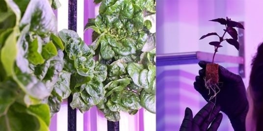 A sustainable, intelligent, indoor solution that innovates in agriculture