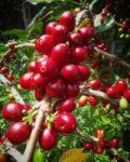 Giri Senang Coffee Community