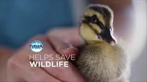Dish Soap for the Wildlife