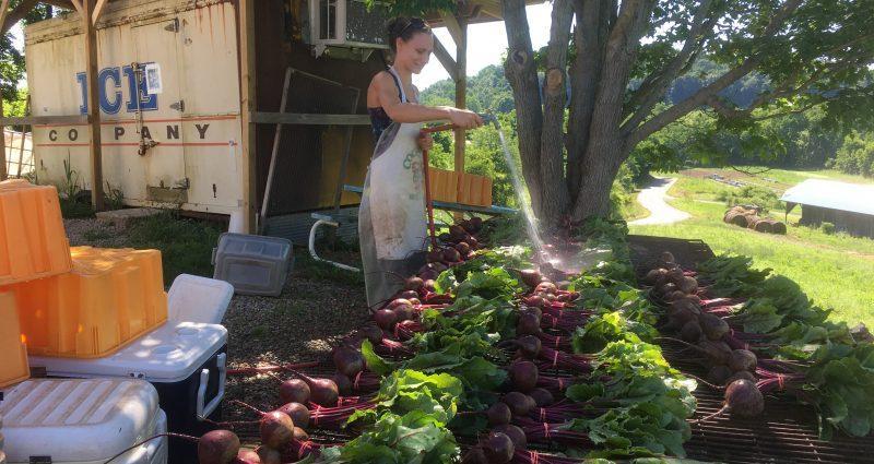 Economically and Environmentally Friendly Year-round Farming