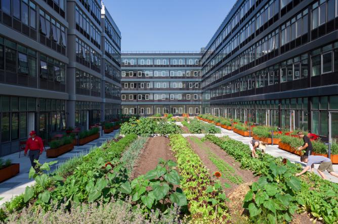 Self Sustaining Farm in Urban Environment