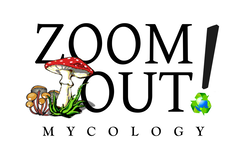 Zoom Out Mycology