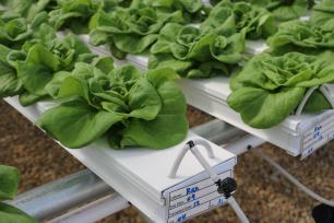 Happy Harvest Hydroponics: An AIM2Flourish Outlook