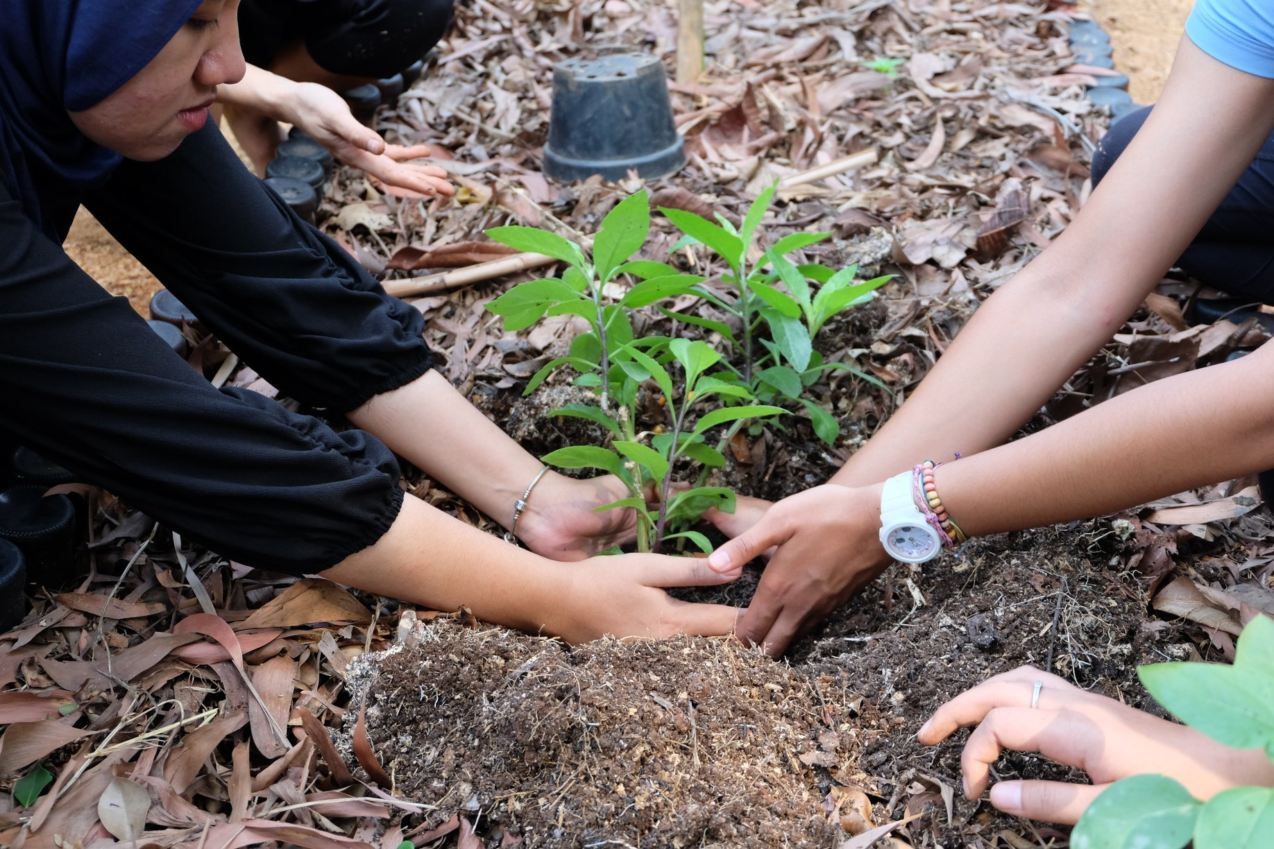 Reconnect Urbanites with Nature through Permaculture in the Outskirts of Jakarta